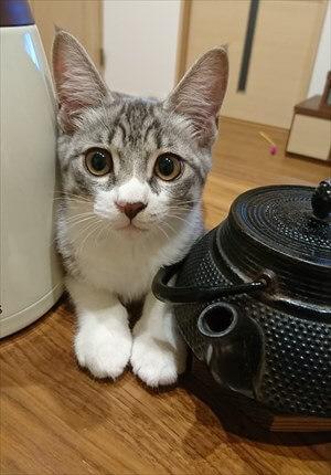 看板猫ルー